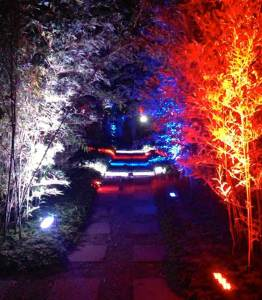 Outdoor-Event-Production-Tree-Lighting