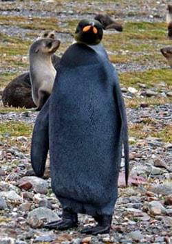 Blackpenguin