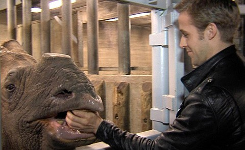 Rhino_gosling