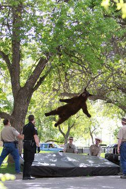 Tree_bear
