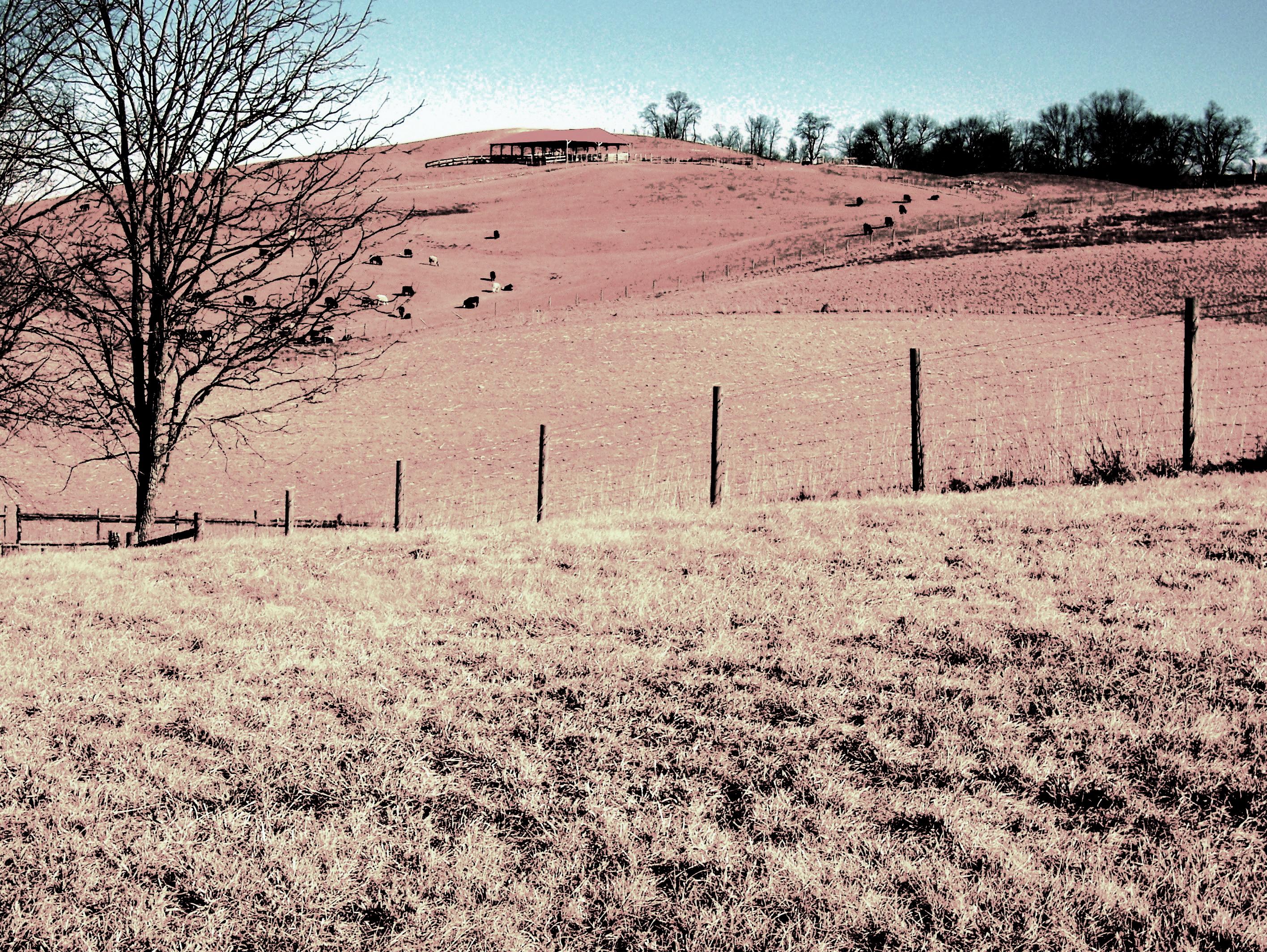 Allison Family Farm
