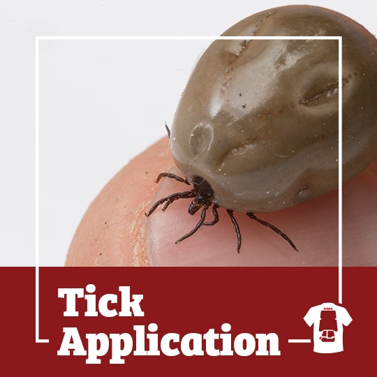 tick, ticks, town and country, town and country pest solutions, pest, pests, rochester, syracuse, buffalo, rochester ny, syracuse ny, buffalo ny, new york, western ny, rochester exterminators, syracuse exterminators, buffalo exterminators, bed bugs, fabry, matt fabry, extermination, hire the pros, friendly, trustworthy