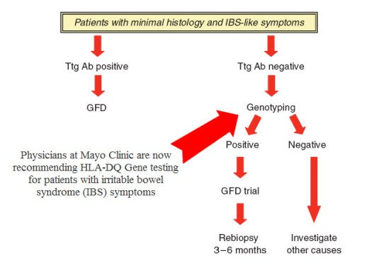 IBS Gluten Testing Diagram
