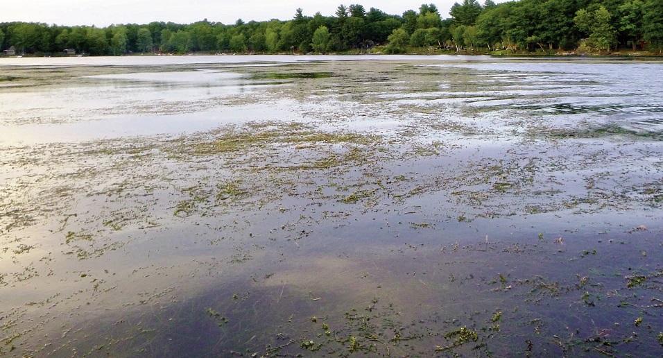 Webber Pond