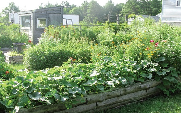 The bounty of the community garden in full bloom. Photo by Connie Bellet