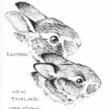 Eastern Top, New England below