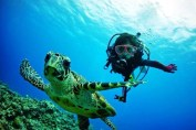 Turtle and Diver on the Great Barrier Reef