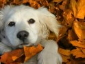 Who doesn't like leaves? Not this pup! Enjoy the change of the grandiose Glen Woods as it gives you great scenery. Embrace the twirls of gold, brown, red as it rustles in your hair as you walk around campus.