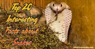 Top 20 Interesting Facts about Snakes