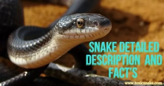 Snake Detailed Description and Types