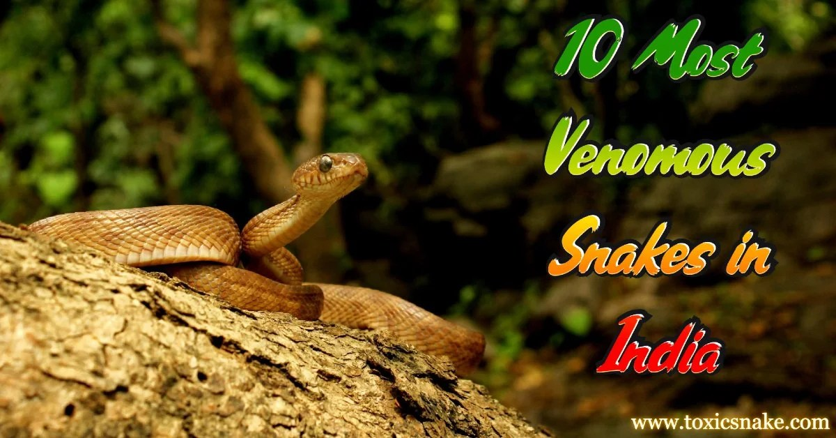 10 Most Venomous Snakes in India