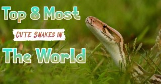 Top 8 Most Cute Snakes in The World