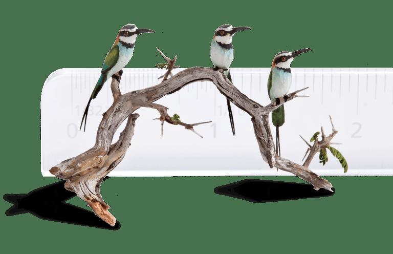 Beth Freeman Kane birds