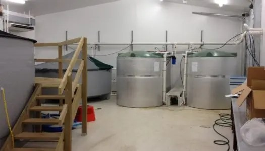 img 1886s 525x300 - Project Pages - Trident Aquaculture