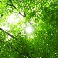木漏れ日が射す木々