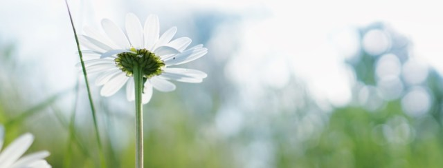空に向かう白い花