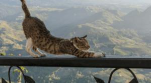 伸びする猫