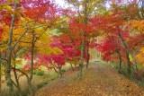 素晴らしい紅葉の「タカドヤ湿地」【豊田市 稲武】