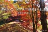 終わってしまった「タカドヤ湿地」2019年の紅葉【豊田市 稲武】