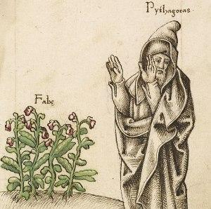 beans pitagoras habas fagioli faba