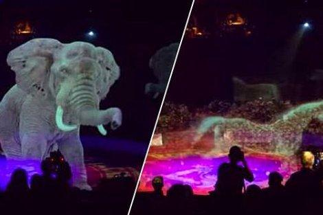 circus circo circus circo animal hologram hologramas