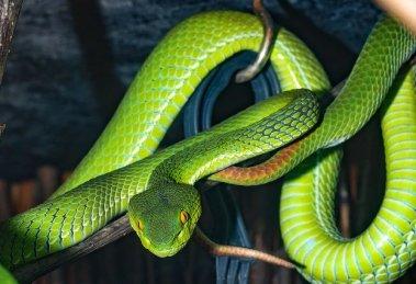 serpiente serpente snake verde