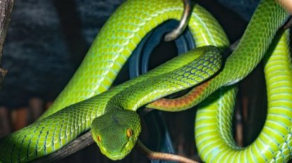 serpientesnake serpiente serpente verde narura wild