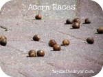 acornraces 017