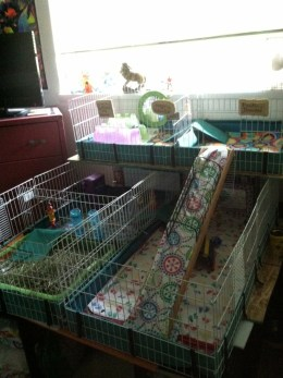 Three Midwest habitats, joined together: source https://uk.pinterest.com/BeverlyJAdkins/guinea-pigs/
