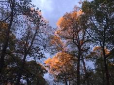 Sunset lights the treetops