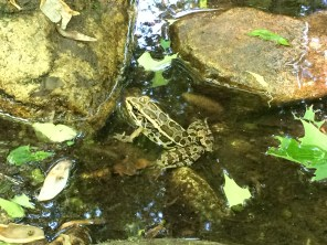 A friendly frog
