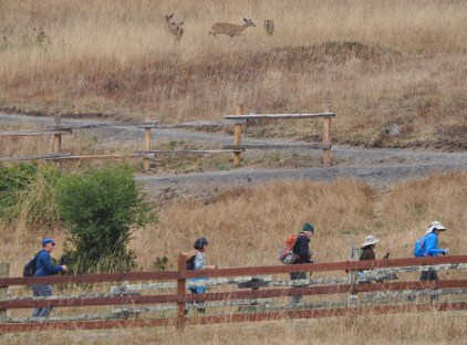 Herds and hikers