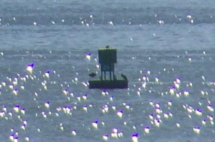It's ya buoy