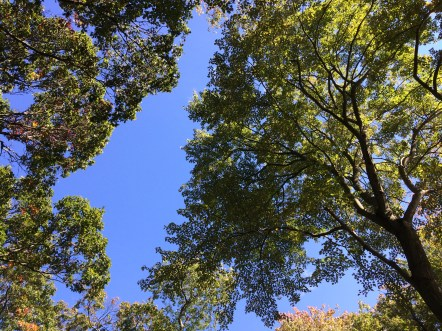 Treetops at Hempstead Lake