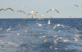 The gull squad