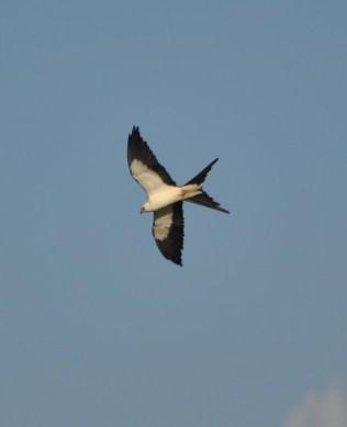 Watch how I soar