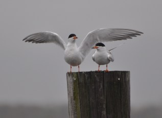 Tern around