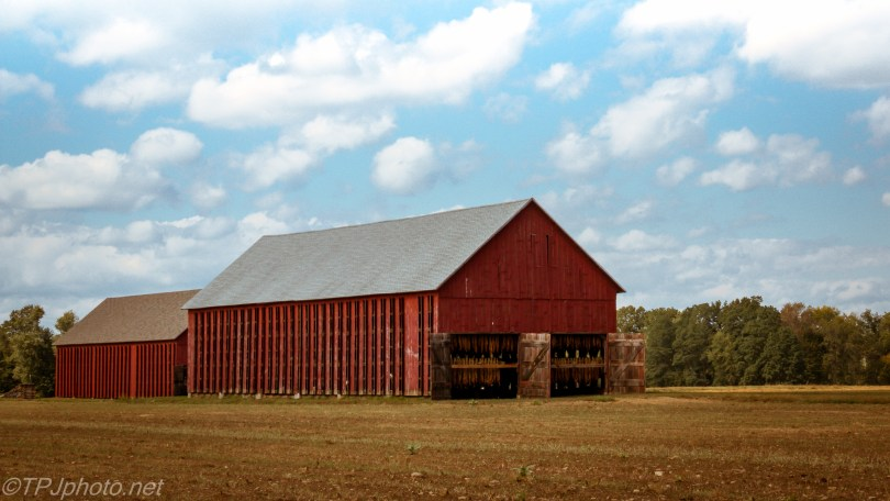 Fall Connecticut Tobacco Barn - Click To Enlarge
