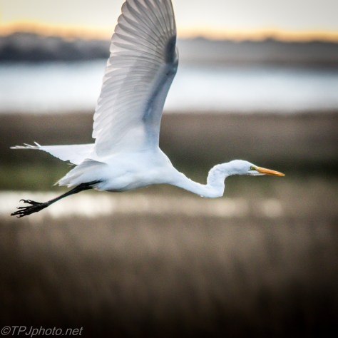 Egret Making An Exit - Click To Enlarge