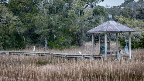 Marsh Pier With Local Residents - Click To Enlarge