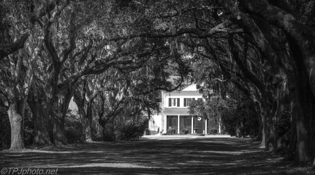 Carriageway To Plantation House Black And White - Click To Enlarge