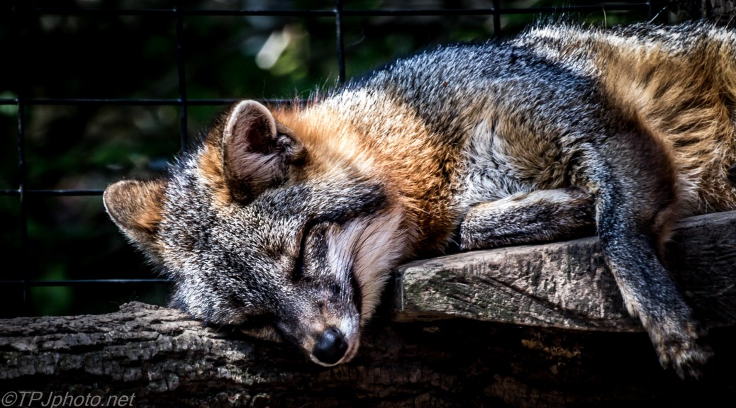 Napping - Click To Enlarge