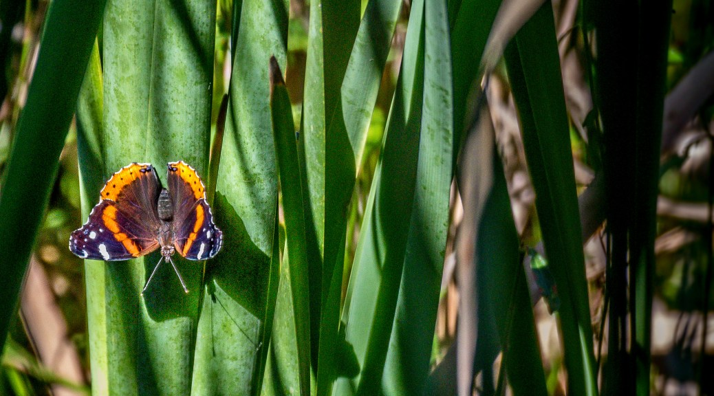 Butterfly In Swamp - Click To Enlarge
