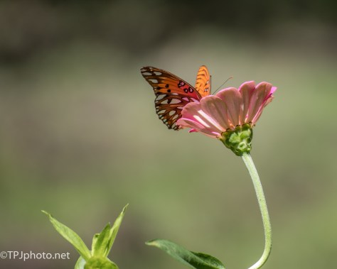 Butterfly Stylized On Flower - Click To Enlarge