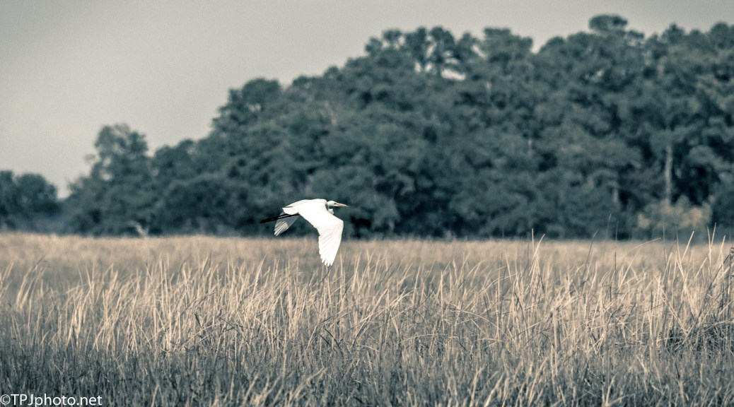 Soft Finish Of A Marsh Fly By - Click To Enlarge