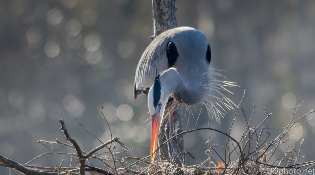 Construction Worker, Heron - Click To Enlarge