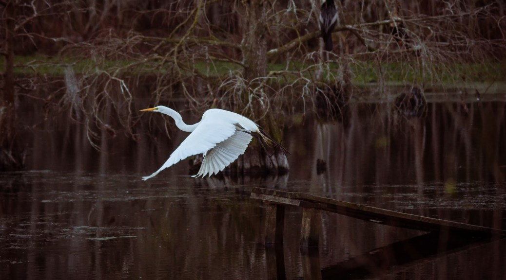 Egret, Last Light - Click To Enlarge