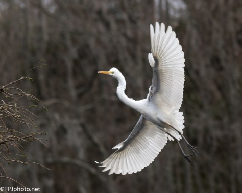 Egret Perched Low - Click To Enlarge