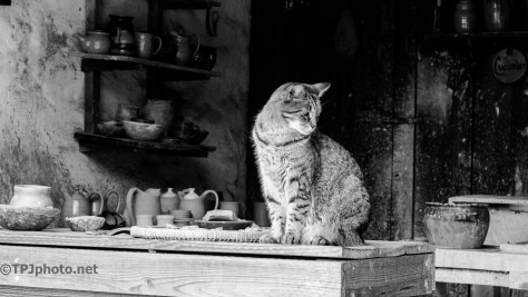 Pottery Barn Cat - Click To Enlarge