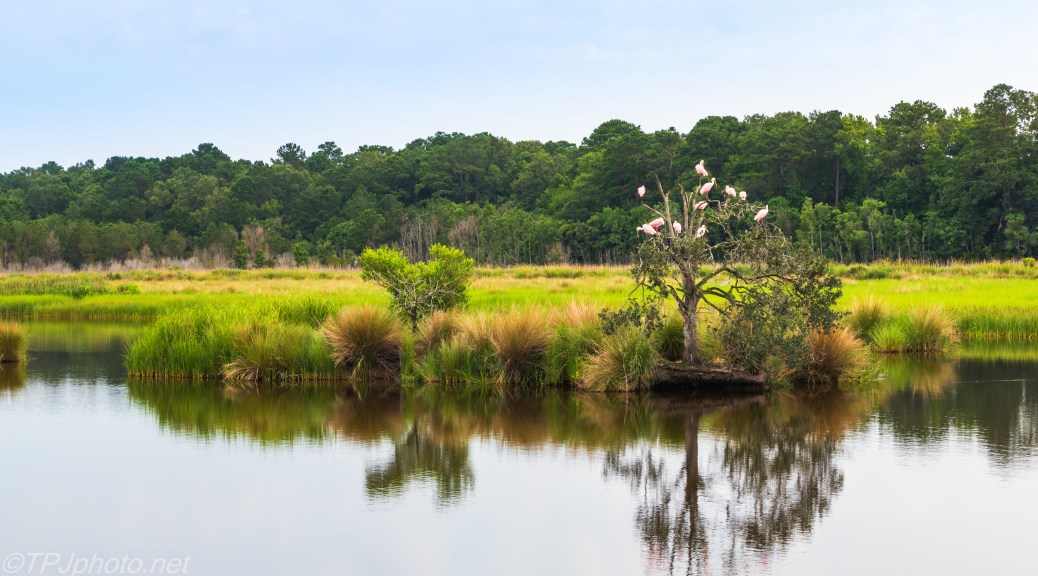 Marsh With Spoonbills - Click To Enlarge